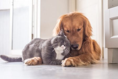 Cat and Golden Retriever snuggling together while laying on a kitchen floor