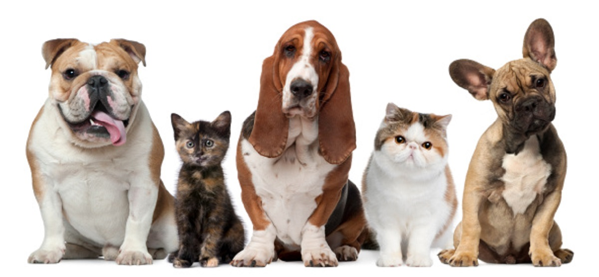 row of dogs and cats standing beside each other